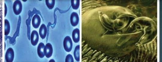 zdjęcie pasożytów żyjących w organizmie człowieka pod mikroskopem