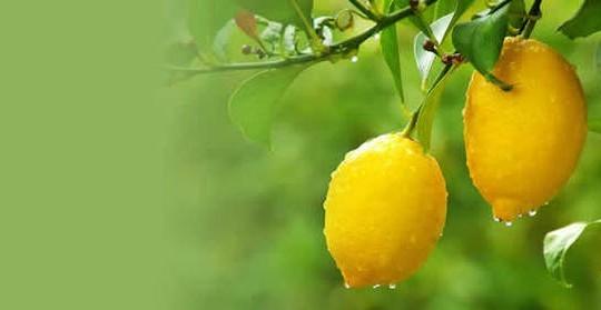 Witamina C zawarta w owocach cytrusowych