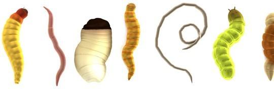 pasożyty najczęściej występujące w organizmie ludzkim