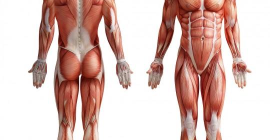 badanie mające na celu analizę składu ciała pacjenta