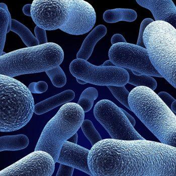 objawy i leczenie pasożytów